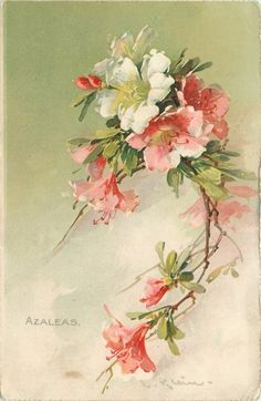 Azaleas: Catherine Klein Wonderful study