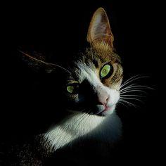 Cat Green Eyes