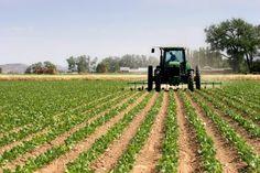 Monsanto-Owned Seed Varieties to Avoid