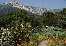 image of the Porter Trail with view to the Santa Ynez Mountains, Santa Barbara Botanic Garden