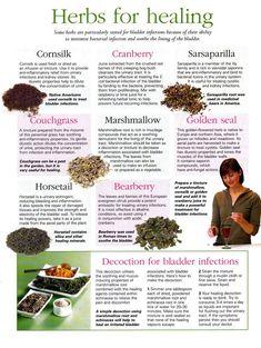Herbs for healing bladder