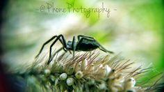 Itsy bitsy spider :)