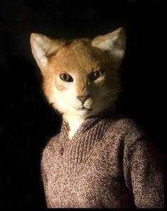 Mr. Cat by *Qarrezel