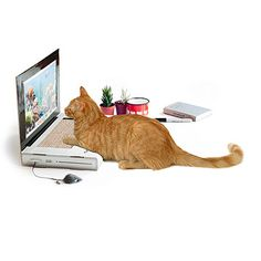 OMG such a good idea! UncommonGoods: Laptop Cat Scratching Pad for $35 #uncommongoods