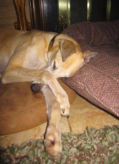 Love,  Greyhound Pets of America Nashville, TN