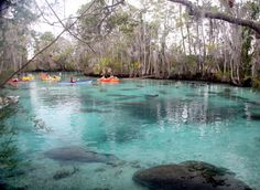 Three Sisters Springs. I would love to visit with my two sisters!  Add to bucket list...!