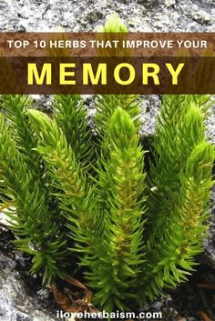 10 Top Herbs That Improve Your Memory Naturally
