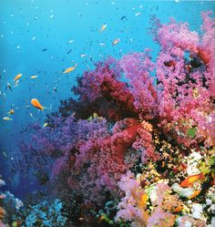 The great coral reef. Austrailia
