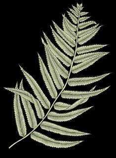 Hd Flowers, Leaf Art, Dandelion, Plant Leaves, Digital, Plants, Dandelions, Plant, Taraxacum Officinale