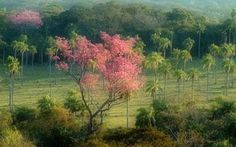 Image result for selvas y bosques