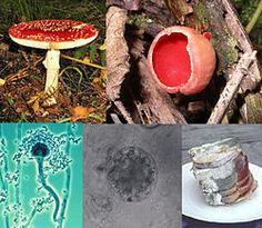 Fungi collage.jpg