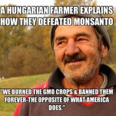 Hungary has taken a bold stand against biotech giant Monsanto and genetic…