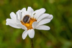 18052014-_MG_5167 | Flickr: Intercambio de fotos Insects, Bee, Animals, Scouts, Naturaleza, Scenery, Photos, Animais, Animales