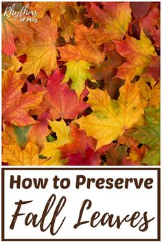 How To Preserve Fall Leaves This Is An Easy Crafting Activity For Kids and Adults Of All Ages You Can Use The Preserved Fall Leaves For Nature Crafts and Art Projects. Pursue Our Tutorial and Be Prepared For Those Falling Leaves Easy Arts And Crafts, Easy Crafts For Kids, Arts And Crafts Supplies, Autumn Crafts, Nature Crafts, Holiday Crafts, Leaf Projects, Art Projects, How To Preserve Leaves