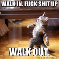 walk in. Fuck shit up walk out. | walking cat