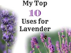 Lavender is just one of many fantastic herbs that are easy to grow and look beautiful!