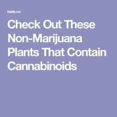 Check Out These Non-Marijuana Plants That Contain Cannabinoids