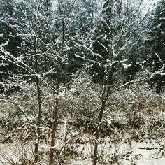 Snow season, snow area