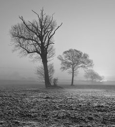 Chalgrave in the mist at sunrise. Chalgrave, Bedfordshire. By Mark Burley