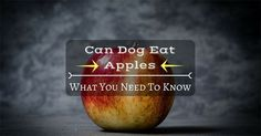 Can Dogs Eat Apples? What You Need To Know