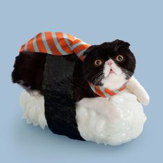 """<strong><a href=""""http://go.redirectingat.com?id=74679X1524629&sref=https%3A%2F%2Fwww.buzzfeed.com%2Fkierawrr%2F14-cats-who-think-theyre-sushi-4gx1&url=http%3A%2F%2Fnekozushi.com%2F&xcust=2203182%7CBFLITE&xs=1"""" target=""""_blank"""">Tange & Nakimushi Peanuts</a> blessed the Internet with the most interesting series of right meow.</strong>"""