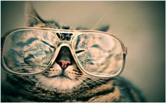 Cat With Glasses Funny Wallpaper | cat with glasses funny wallpaper 1080p, cat with glasses funny wallpaper desktop, cat with glasses funny wallpaper hd, cat with glasses funny wallpaper iphone