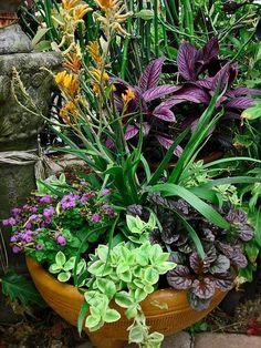 Container Gardening with KatG coleus Outdoor Planters, Garden Planters, Outdoor Gardens, Balcony Garden, Container Flowers, Container Plants, Container Gardening, Beautiful Gardens, Beautiful Flowers