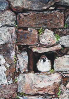 Watching The World Pass By by Alexandra Lavizzari Bird Paintings, Bird Drawings, Painting & Drawing, Birds, World, Artist, Paintings Of Birds, Artists, Bird