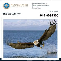Come and experience the Bird Hide set at Pinnacle Point Beach & Golf Resort, we have a huge variety of birds ranging from the magnificent soaring eagles to the small South African humming birds. #wildlife #lifestyle #destination