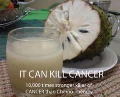 """10000 times stronger killer of CANCER than Chemo"""".. do share it.. can save many lives, fill up hopes and build confidence in the patients... The Sour Sop or the fruit from the graviola tree is a miraculous natural cancer cell killer 10,000 times stronger than Chemo."""