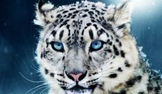 Top 10 animales en peligro de extincion