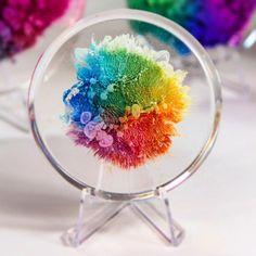 "6,347 Likes, 51 Comments - Josie Lewis (@josielewisart) on Instagram: ""Here's a cute little resin petri. Rainbow-mushroom-fungi-frozen splash-amazing. Soon I'll be…"""