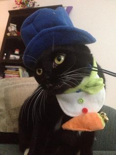 Funny Cat in a Hat