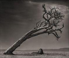 Les animaux africains de Nick Brandt animal afrique savanne nick brandt 05 photographie art
