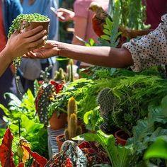 Unique Plants, Exotic Plants, All Plants, Tropical Plants, Spring Starts, Green Rooms, One Tree, Plant Design, Plant Decor