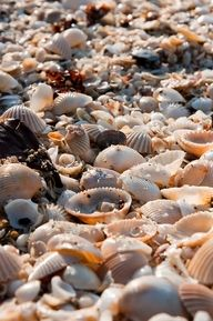 finding shells on the beach!