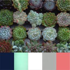 navy, mint, white, soft grey, pop of coral Colour Pallete, Colour Schemes, Color Combos, Color Palettes, Colorful Succulents, Planting Succulents, Buy Succulents, Succulent Gardening, Succulent Arrangements