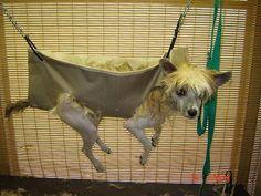 23 Best Dog Sling Images On Pinterest Pets Dog Grooming Salons