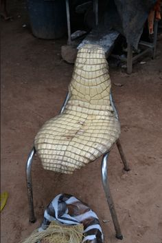 Un caimán para sentarse (Vichada)