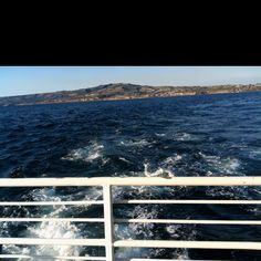 Whale watching out of long beach 30 bucks a person 2 hours of awesome!