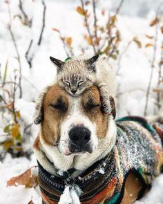 Vriendschap hond en kat