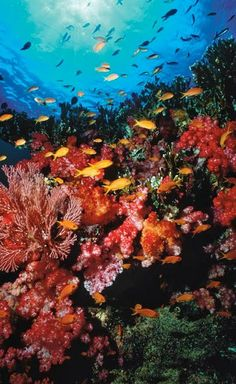 The most amazing coral reefs for diving and snorkelling in the world.