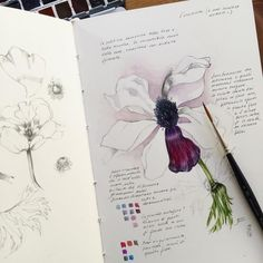 Dark anemone study in my sketchbook. Beautiful reds, violets and lights on the petals. . . . . . #art #illustration #drawing #journal #artist #sketch #sketchbook #artistsoninstagram #worksonpaper #natureartist #painting #watercolor #watercolorartist #winsorandnewton #naturalhistoryillustration #naturejournal #botanicalart #botanicalillustration #botanicalartist #botanicalpainting #botanicaldrawing #botany #botanical #flora #flowers #plants #nature #wildflowers #naturestudy #giacominaferrillo