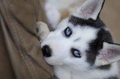 gorgeous dog:D I want one!
