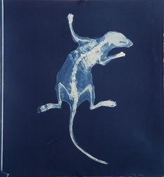 Carrie Witherell; cyanotype; relics