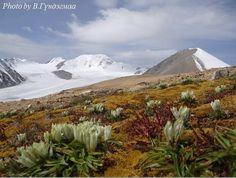 Altai Tavan Bogdiin tundar 2015.08.27.Mongolia