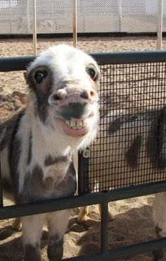 Some farm animals at local adoption shelters try harder..  I will take you home!!!!!!