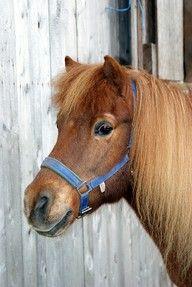 Was für ein hübsches Pony. Mit Beauty können Kinder zum ersten Mal Kontakt mit Pferden aufnehmen. Ponyreiten für Kinder im Raum Neu-Ulm