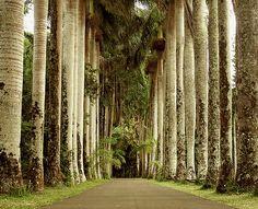 Pamplemousses, Mauritius Island.