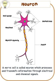 Nerve Cell Poster ©ITD  Clipart Courtesy: The Cher Room